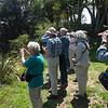 Looking at birds in Mt Eden Park
