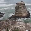 Australasian Gannet Colony at Muriwai Beach (video)