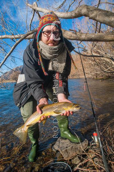 DSC_5902 Brown trout (Salmo trutta) lake fish, caught on a winter license in Lake Pearson *