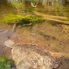 DSC_5501 Black flounder (Rhombosolea retiaria) are most common in estuaries, harbours and lower levels of rivers, and may venture many kilometres upstream. Waitati Estuary *