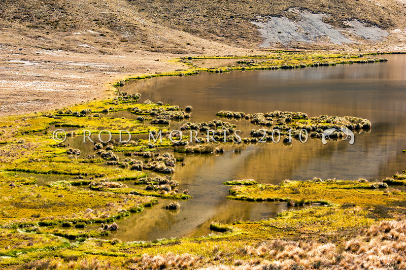 DSC_1856 Tarndale bully (Gobiomorphus alpinus) habitat of a small landlocked derivative of the diadromous common bully. Confined to a group of small, post-glacial tarns in sub-montane Marlborough. Much of this habitat is infested with trout. Fish Tarn, Molesworth *