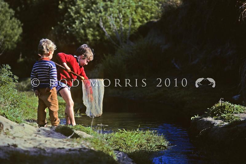 11005-85213 Southern freshwater crayfish, or koura (Paranephrops zealandicus) young children catching koura in a stream. Boulder Beach, Otago Peninsula *