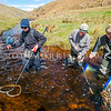 DSC_5173 Eldons galaxias (Galaxias eldoni) an electro-fishing team surveying Stony Stream in the Lammerlaw Range for Eldon's galaxias -a roundhead lineage found in the Lower Taieri *