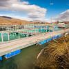 DSC_6022 Quinnat or Chinook salmon (Oncorhynchus tshawytscha) a commercial salmon farm on the Ruataniwha Canals near Twizel.