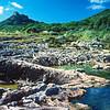 11003-55007 Egg-laying skink (Oligosoma suteri) rock pool habitat. Aorangi , Poor Knights Group *