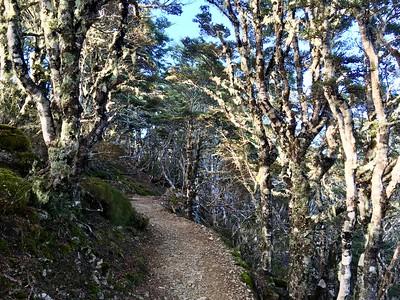 Zigzag trail was a pleasure to run on