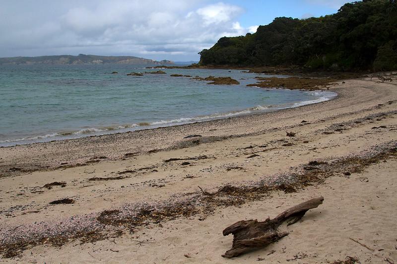 visit Tiritiri Matangi Island