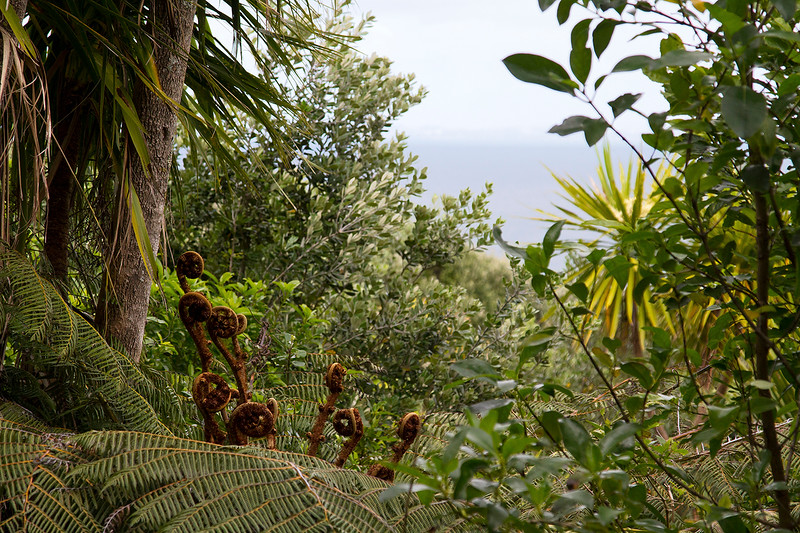 nz ferns and a view from the island