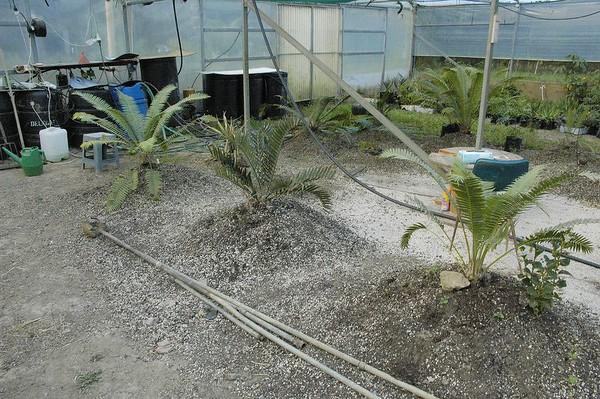 Dave and Sjörs cycad emporium Matakana New Zealand - Apr 2005