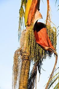Palm tree seeds Moana Ave Auckland