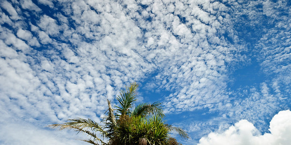 Cirro cumulus clouds over Auckland