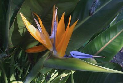 Bird of Paradise Moana Ave Onehunga Auckland New Zealand - 29 Aug 2006