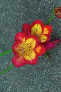 Friesias Moana Ave Onehunga Auckland New Zealand - 17 Sep 2006