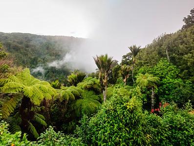 Waitakere rain forest Auckland New Zealand