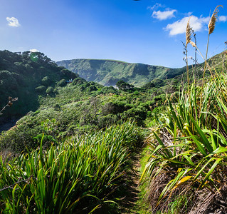 Walking track and view of the Te Henga ridge Bethells West Auckland