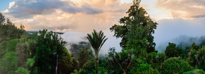 Sunset Waitakere rain forest Auckland