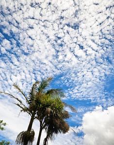 Cirro cumulus clouds over Auckland