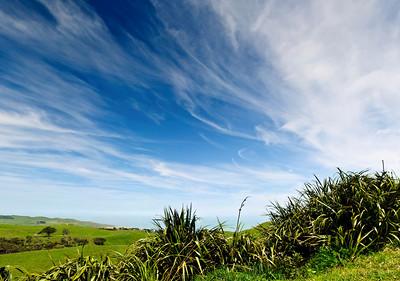 Flax bush Manukau Heads Awhitu Peninsula North Island New Zealand