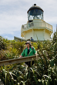 Gill at the Manukau Heads Lighthouse Awhitu Peninsula North Island New Zealand