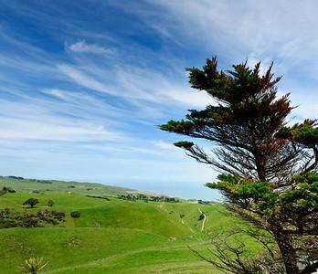 Pasture lands Manukau Heads Awhitu Peninsula North Island New Zealand