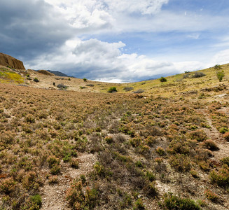 Slope covered with blooming wild thymes Bannockburn Central Otago South Island New Zealand