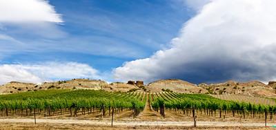 Vineyard Bannockburn Central Otago South Island New Zealand