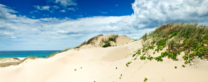 Sand dunes Ocean Beach Bream Head New Zealand