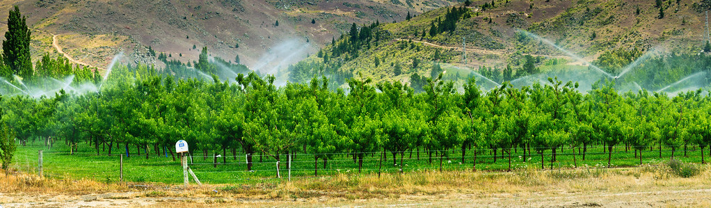 Irrigation of fruit orchard Central Otago New Zealand