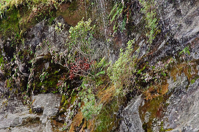 Details of cliff face vegetation growth Doubtful Sound Fjordland South Island New Zealand
