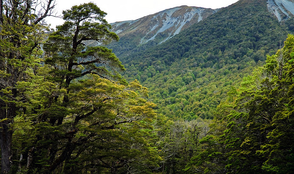 Rain forest Cascade Creek Fjorland National Park South Island New Zealand