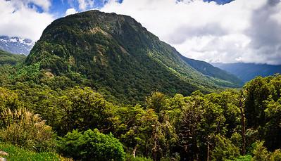 Rainforest Fjordland National Park South Island New Zealand