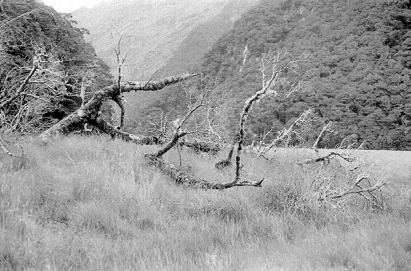 The flats Routeburn track Fjorland New Zealand - 197X