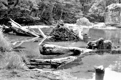 Routeburn stream Routeburn track Fjorland New Zealand - 197X