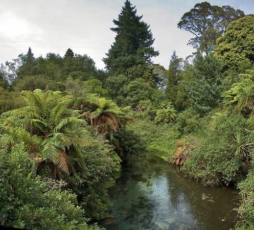 Stream Hamurana Spring New Zealand - 2 Jan 2006