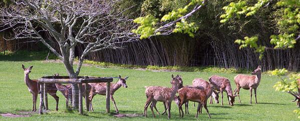 Deer stock Karapiro New Zealand - 4 Nov 2006