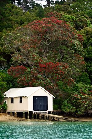 Boat shed and flowering pohutukawa School House Bay Kawau Island New Zealand