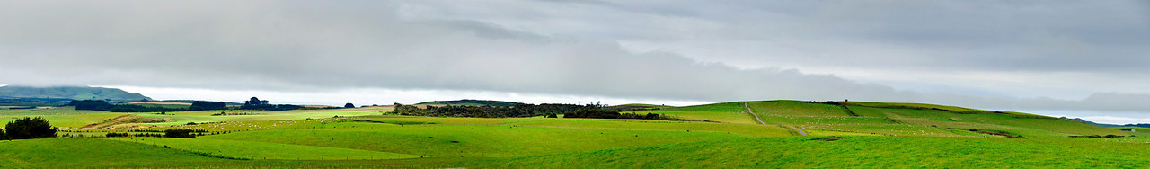 Sheep grazing pastures Southland