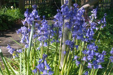 Bluebells Moana Ave Onehunga Auckland New Zealand - 24 Sep 2006