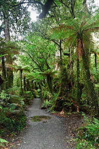 Walkway to the McClean Falls The Catlins South Island New Zealand