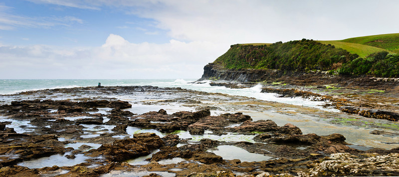 Petrified forest Curio Bay The Catlins South Island New Zealand