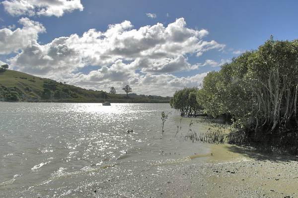 Mangroves Port Albert Kaipara Habour New Zealand - Apr 2005