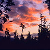 11009-06113  Kahikatea (Dacrycarpus dacrydiodes) forest at sunset. Haast *