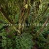 DSC_4737 Tawa (Beilschmiedia tawa) looking down into forest interior at dusk. Otari *