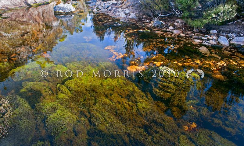 DSC_9894 Bryophyte beds of underwater moss in the Waimangaroa River, Denniston
