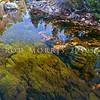 DSC_9894 Bryophyte beds of underwater moss in the Waimangaroa River, Denniston *