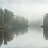 DSC_8101120  Kahikatea (Dacrycarpus dacrydiodes) forest in early morning mist, bordering both banks of the Arnold River, Lake Brunner *