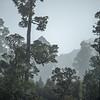DSC_8101116  Kahikatea (Dacrycarpus dacrydiodes) forest in early morning mist, on the lake shore. Moana, Lake Brunner *