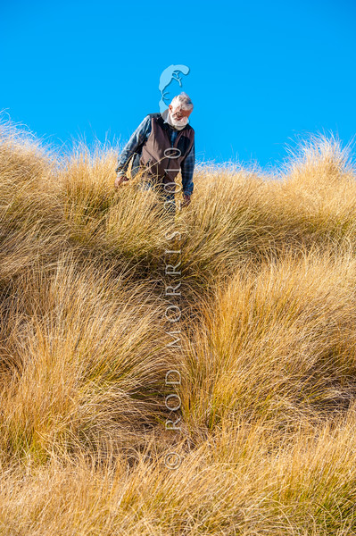 DSC_7836 Emeritus Professor Sir Alan Mark has been one of this country's staunchest defenders of the living land. He is seen here in the snow tussock grasslands - his specialist field. Te Papanui Conservation Park, Lammerlaw Range, Otago *