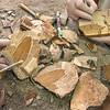 DSC_6003 Preparing fossil supplejack  leaves from Foulden Maar *