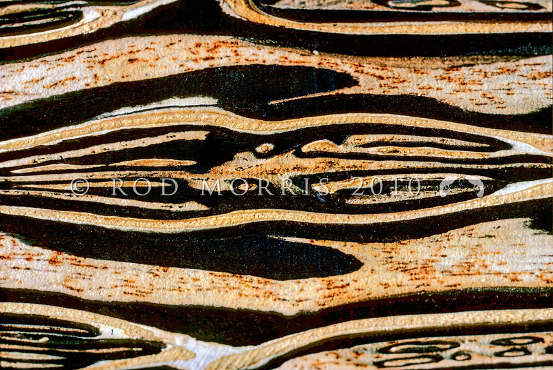 11009-01014 Mamaku, or black tree fern (Cyathea medullaris) exposed detail of trunk, the pattern is caused by hard black stipe bases standing out against the soft white pith